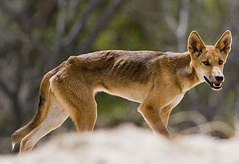 The Habitat Advocate » Fraser Island tourism