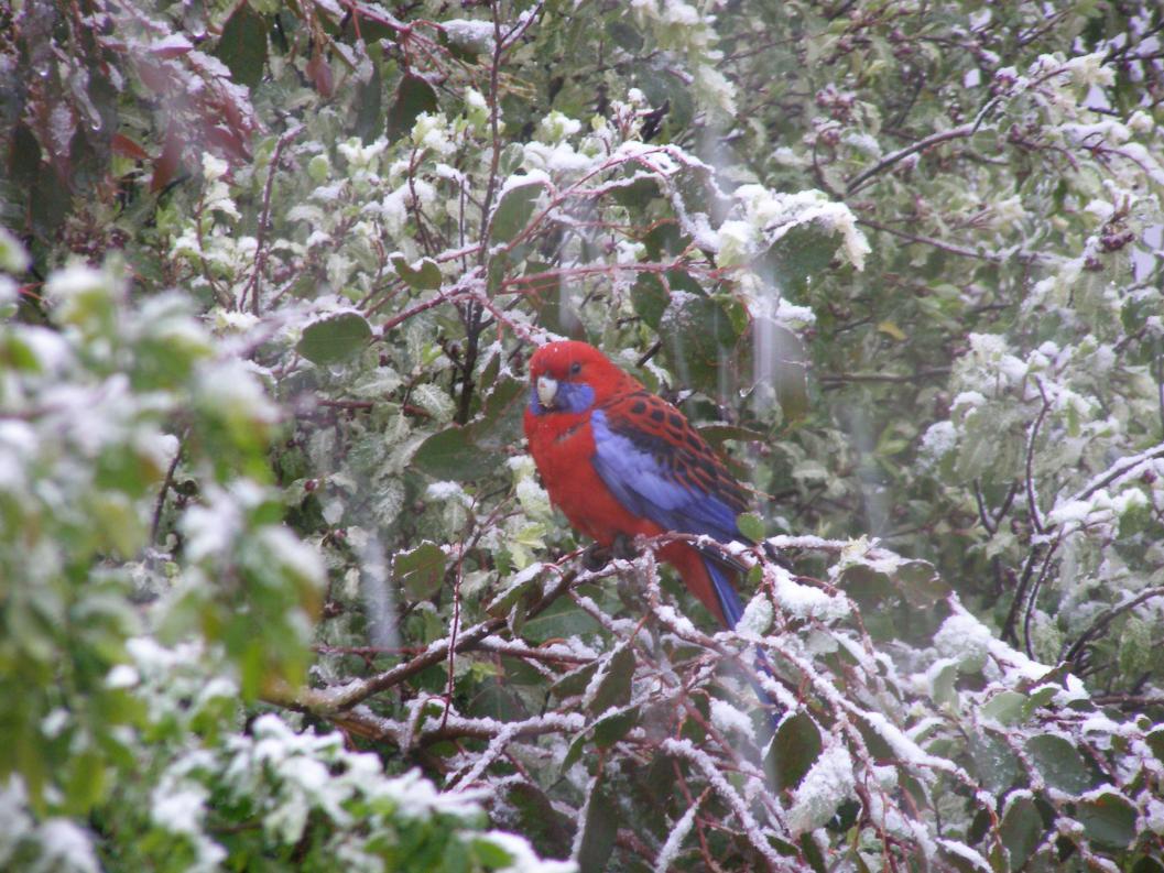 Katoomba Snow