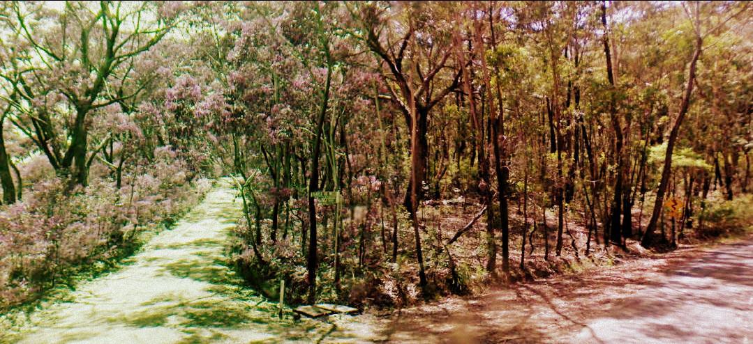 Farrer Road Mount Wilson