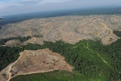 Malaysian Logging