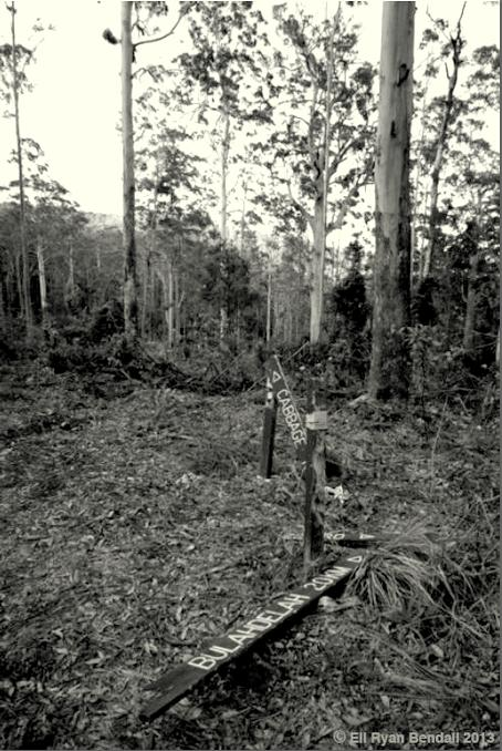 Myall River Old Growth Forest Destruction