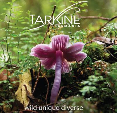 Tarkine Tasmania - wild unique diverse