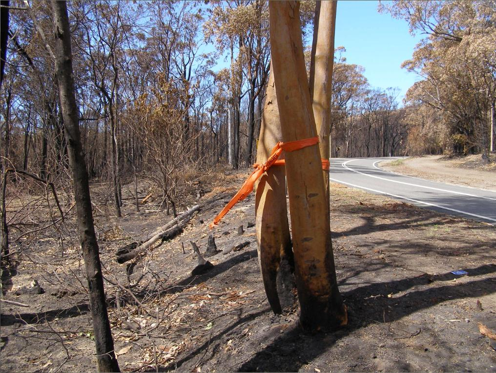 Hawkesbury Heights Hazard Reduction