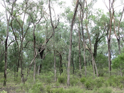 Leard State Forest