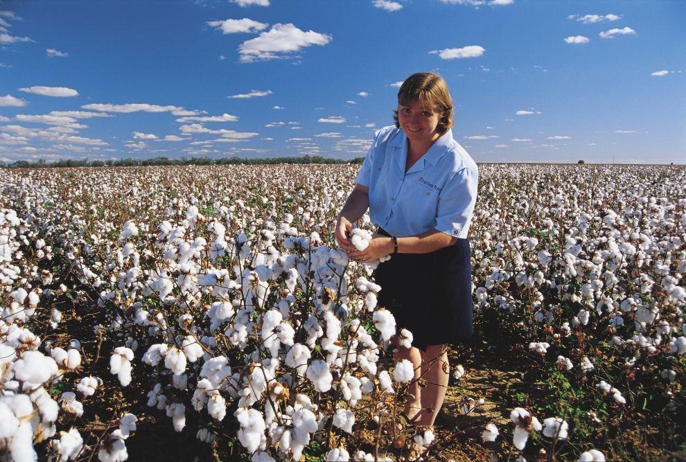 Narrabri Cotton