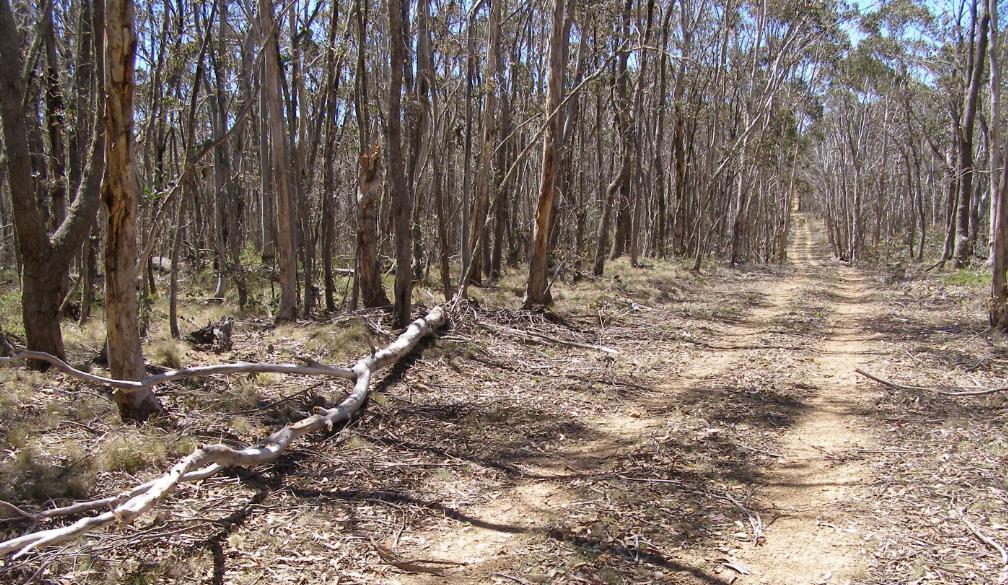 Kanangra Range trail