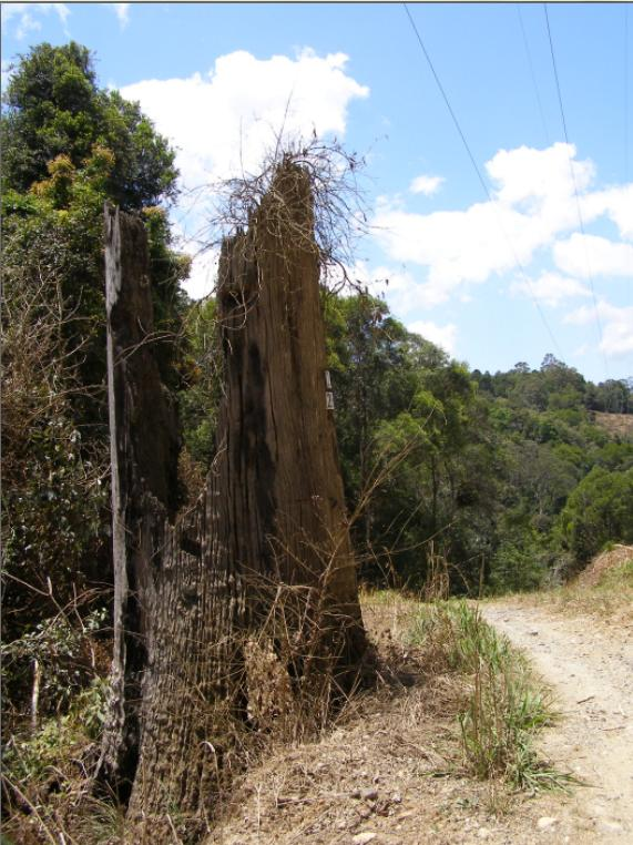 Logging legacy of the Northern Rivers