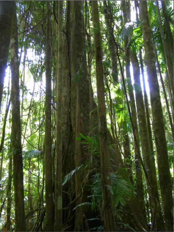Nightcap National Park Rainforest