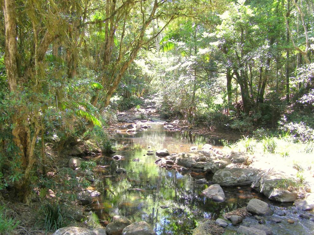 Terania Creek