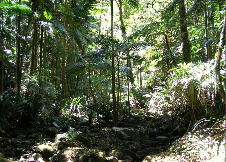 Terania Creek 2013