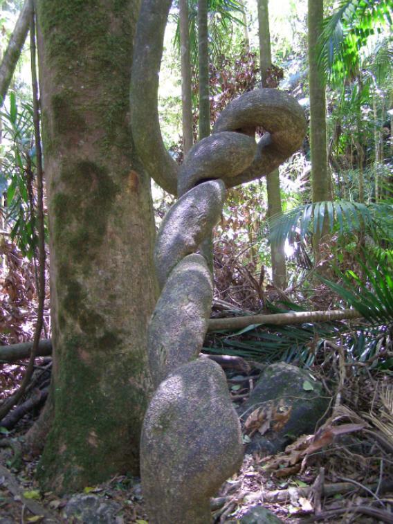 Terania Creek rainforest