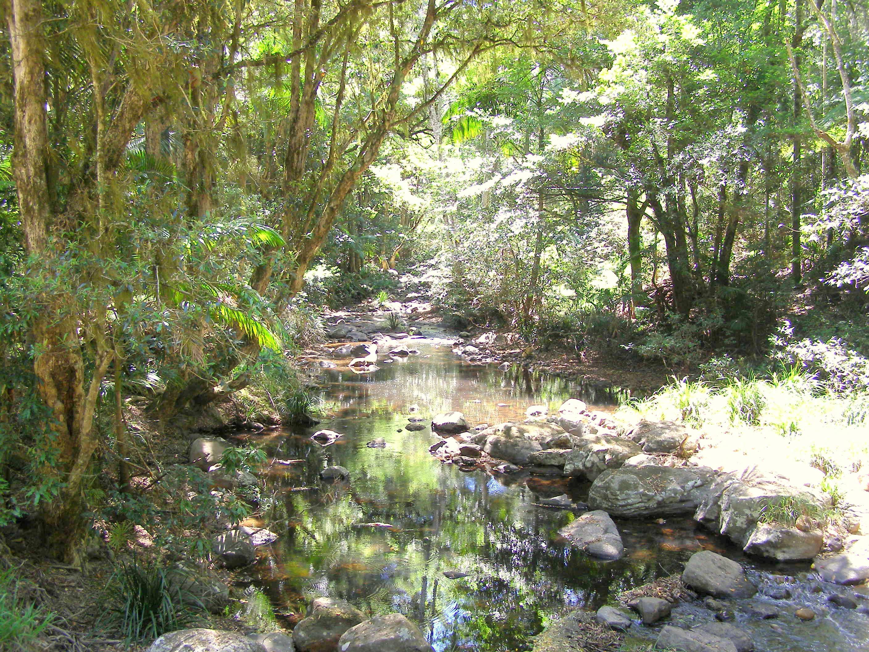 The Habitat Advocate » Blog Archive » 1979 Terania Creek direct ... New Animal Discovered 2014