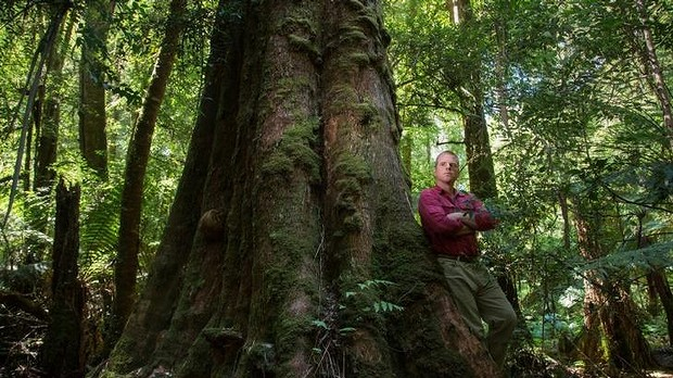 Tasmanian World Heritage Forests