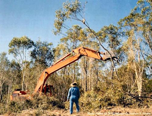 Whitehaven Coal killing koalas